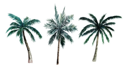 Watercolor set of palm trees on white background. Hand drawn summer illustration. Isolated image