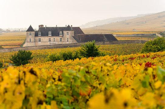 Le Clos Vougeot en Bourgogne, côte-d'or en automne avec les vignes jaunes