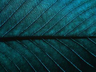 aged blue leaf pattern texture closeup