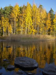 Fall colors reflection. Brightly colored autumn trees reflected on the calm water of the lake Saimaa in imatra, Finland