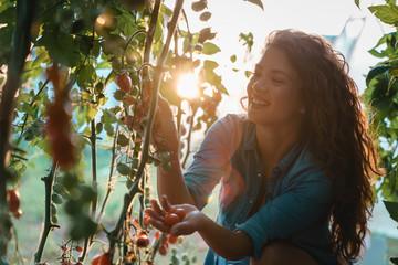 Attractive happy female farmer working in greenhouse - Stock photo