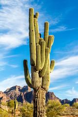 Foto op Plexiglas Cactus Cactus against mountain background