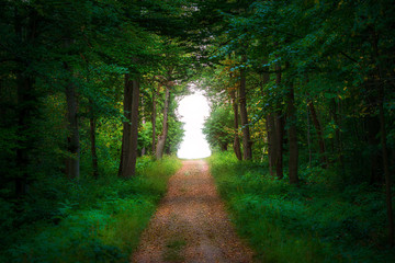 Photo sur Aluminium Route dans la forêt Straight path leading into a forest clearing formed as a keyhole