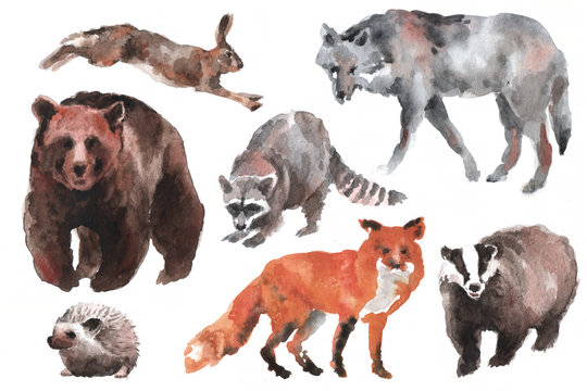 Hand drawn watercolor forest animals, isolated on white background