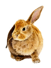 Picture of cute furry rabbit hand drawn in watercolor isolated on a white background. Watercolor illustration