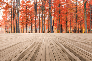 Printed roller blinds Beige Empty wooden board square and beautiful colorful forest in autumn