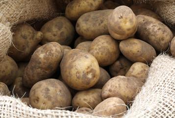 raw potatoes in the jute sack