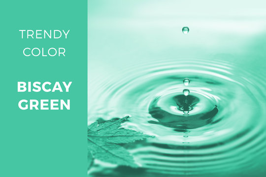 Biscay green - trendy color 2020, toned close-up Autumn image of drops falling into water with floating dry maple leaf