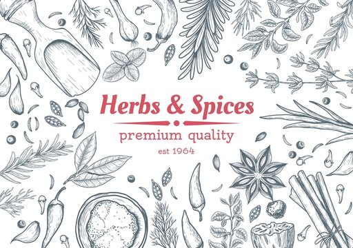 Spice and herbs top view frame. Spice and herbs design. Vintage hand drawn sketch vector illustration. Vector Design template. Vector card design with hand drawn spices and herbs.