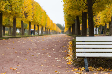 Autumn. Empty bench in autumn park on fall yellow leaves background
