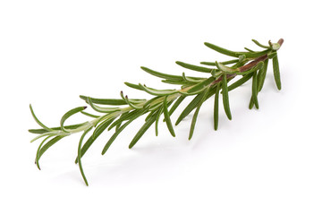 Fresh branch of rosemary herb, isolated on white background