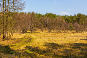 Forest with a clearing in Kashubia, Pomerania, Poland.