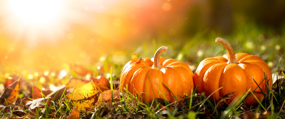 Two Mini Pumpkins And Leaves In Grass At Sunset - Thanksgiving/Autumn Fotoväggar
