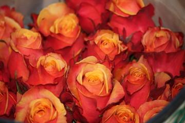 orange rose bouquet in ecuador