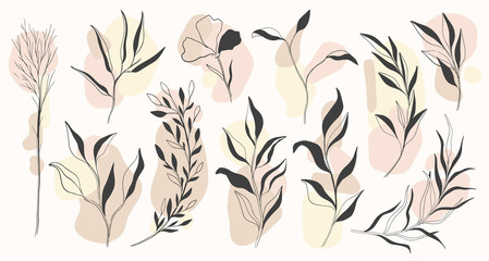 Plant nature hand drawn set. Collection botanical element.Elegante vintage style. Wall mural
