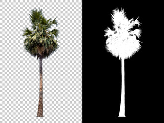 Foto auf Leinwand Palms Isolated coconut palm tree on white background with high quality mask alpha channel and clipping path. Suitable for natural articles both on fine print and web page.