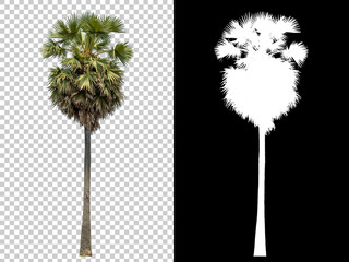 Printed roller blinds Palm tree Isolated coconut palm tree on white background with high quality mask alpha channel and clipping path. Suitable for natural articles both on fine print and web page.