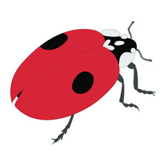 Ladybird color illustration isolated on white background. Vector.