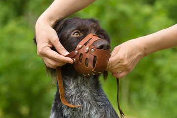 human hands put a muzzle on the dog