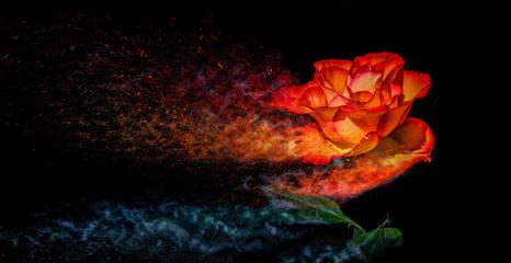 Rose like a Sandstorm