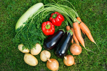 Fresh vegetables on a background of green grass. Carrots, onions, potatoes, eggplant, zucchini and red pepper close-up.