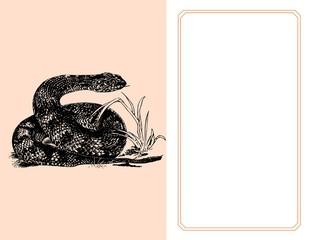 Una víbora europea. La atención de las serpientes ha sido captada por la mano izquierda de los fotógrafos, que está justo encima de la parte superior del marco. La serpiente está oliendo la mano al s