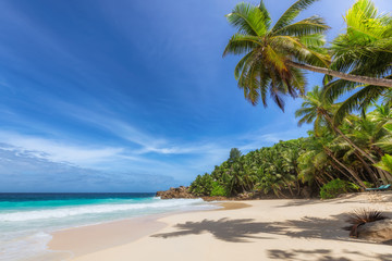 Fototapete - Paradise beach. Sunny beach with palm and turquoise sea. Summer vacation and tropical beach concept.