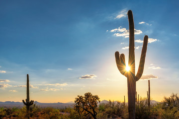 Fotobehang Cactus Silhouette at Saguaro cactus at Sunset in Sonoran desert in Phoenix, Arizona, USA