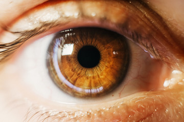 brown eyes women macro photography