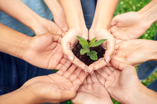 Volunteering. Young people volunteers outdoors together hands top view close-up holding tree seedling