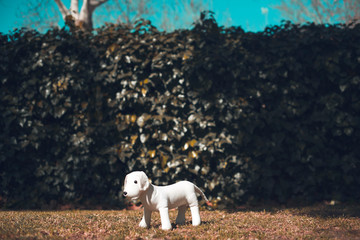 Tiny white toy dog in the park
