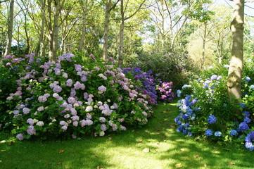 Keuken foto achterwand Hydrangea Hortensia Hydrangea
