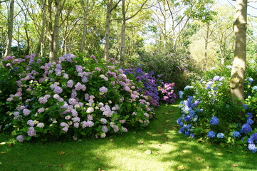 Canvas Prints Hydrangea Hortensia Hydrangea