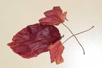 Jesienne liście w kolorze czerwonym