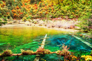 Canvas Prints Yellow Amazing lake with clear azure water in autumn forest