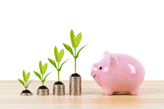 Piggy bank, and coin stack with growing tree leaves on white background, saving concept