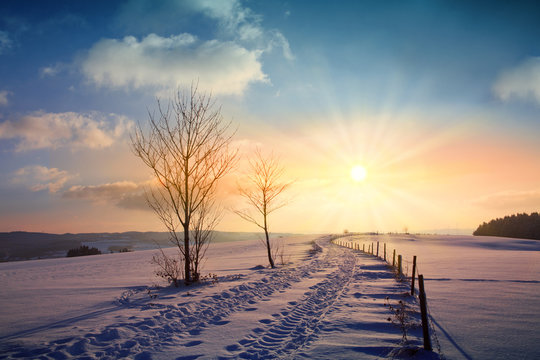 Winter sunset landscape with tree and field way.