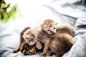 귀여운,고양이,애완동물,수염,얼룩무늬고양이,얼룩무늬,pet,animal,근접사진,아기고양이