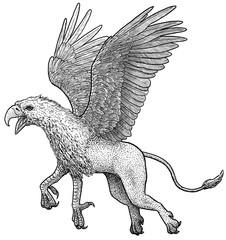 Griffin illustration, drawing, engraving, ink, line art, vector