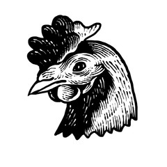 design of a domestic chicken head