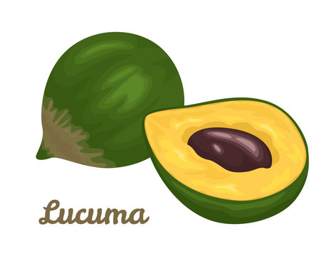 Lucuma fruit isolated on white background. Vector illustration of superfood in cartoon simple flat style.