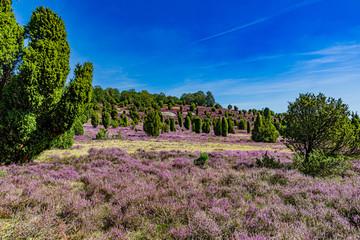 Wandern durch die Landschaft der Lüneburger Heide 2