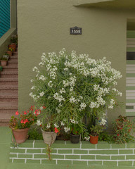 Potted plants and flowers on green painted wall