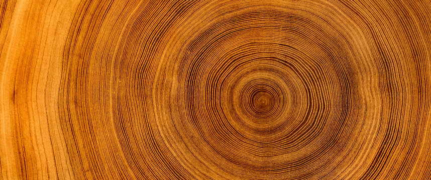 Detailed warm dark brown and orange tones of a felled tree trunk or stump. Rough organic texture of tree rings with close up of end grain.