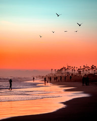 Pastel Sunset with Seagulls
