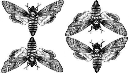 Seamless pattern. Butterfly Acherontia atropos dead head, adam's head. Black and white graphics handmade. Pattern