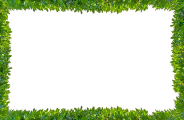 frame made of green grass isolated on white Wall mural