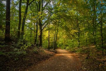 Wanderung auf dem Mühlenweg durch den herbstlichen Tegeler Forst in Berlin