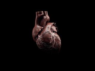 3d Illustration of Anatomy of Human Heart Isolated on black