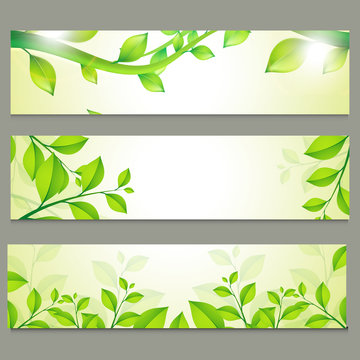 Ecological website headers with green leaves.